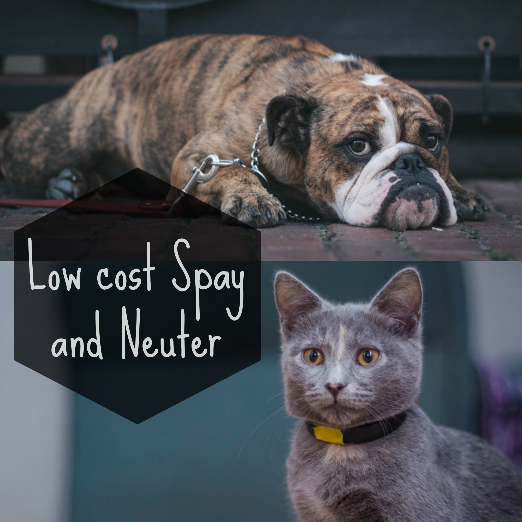 Low cost Spay and Neuter